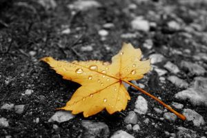 yellow-leaf-1087751-m