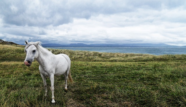 horse-58374_640