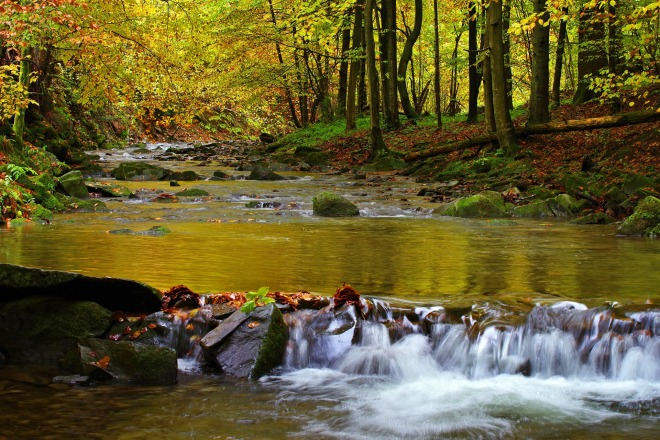 image of a stream in a forest